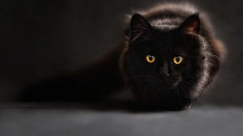 Regno Unito, misteriosa scomparsa di sette gatti neri da due villaggi … – Il Messaggero