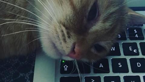 Ma cosa vuole il mio gatto? Ecco i segreti per capirlo – Il Secolo XIX