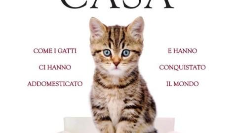 Non di sole fusa vive il gatto, signore del mondo – La Stampa