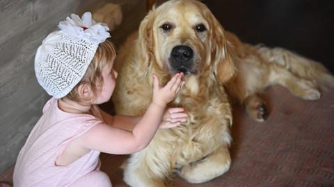 Salute: quattro zampe terapeutiche, il ruolo degli animali nella … – Meteo Web