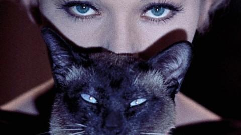 Dedicato ai gatti il manifesto del 35° Torino Film Festival – La Repubblica