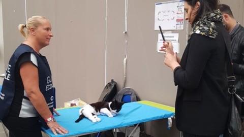 Reggio: fiera gremite dagli appassionati di gatti per l'esposizione … – Sassuolo 2000