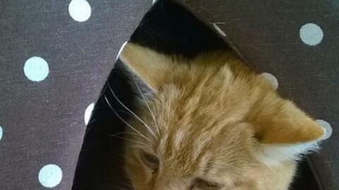 Strage di gatti, morti 11 mici: forse avvelenati – La Provincia