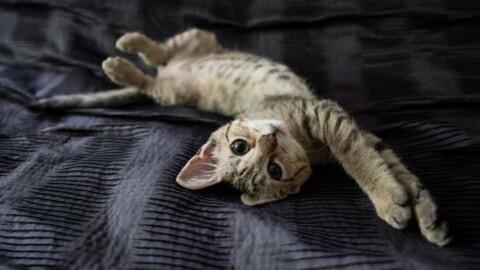I gatti alla conquista del mondo: ecco perché comandano loro! – 105.net