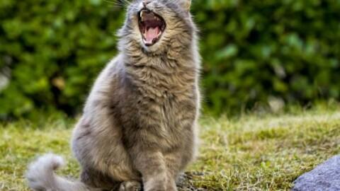 Giappone: un gatto è accusato di omicidio nei confronti della … – 105.net