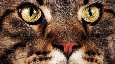 """SuperCat Show, """"chi ha detto i gatti devono stare chiusi a casa?"""" – askanews"""