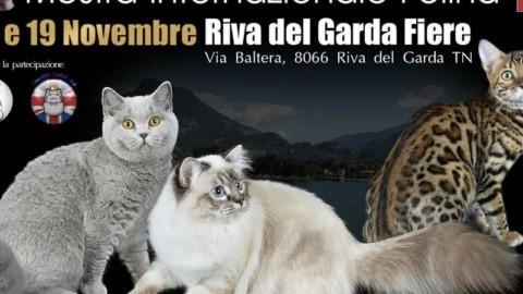 Centinaia di gatti (e qualche furetto) da tutta Europa si danno … – il Dolomiti