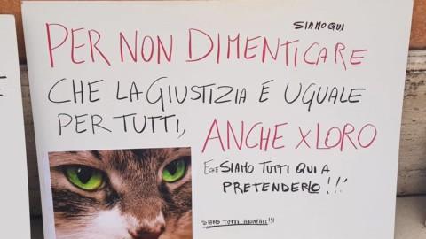 Nel garage torturava, scuoiava i gatti dei vicini e quelli randagi. Il pm … – PerugiaToday