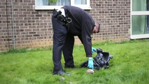 Gb, serial killer di gatti semina il panico nei dintorni di Londra: finora … – Il Messaggero