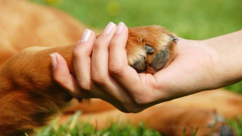 Il dolore per la perdita dell'animale domestico è risarcito dal colpevole – Il Mattino