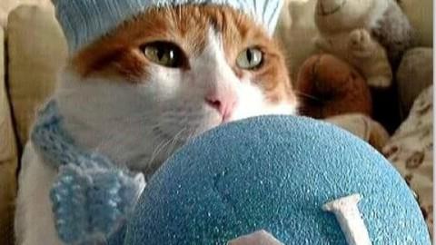 Tutti pazzi per Edùard: il gatto tifoso del Napoli – Il Mattino