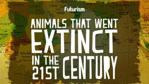 Ecco l'Atlante della vita in soccorso delle specie in via di estinzione – green.it (Blog)