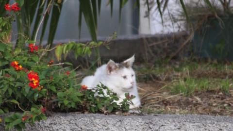 Una nostra lettrice interviene sulla colonia felina a Taggia e sul gatto … – SanremoNews.it