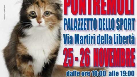 I gatti più belli del mondo in mostra a Pontremoli – Eco della Lunigiana – Eco Della Lunigiana