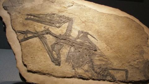 Com'era la Lombardia nel Triassico Dallo Pterosauro del Caffi fino a… – Bergamo Post