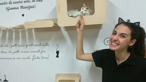 """Caffè, tè e gatti. A Cagliari apre il primo Cat Cafè: """"E Pet Therapy sia … – Casteddu on Line"""