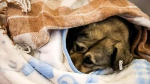10 consigli per aiutare cani e gatti durante l'inverno – greenMe.it