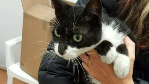 """Non dire gatto se non ce l'hai nel """"pacco"""". E l'animale finisce per … – Lecceprima.it"""