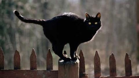 L'esame anti superstizione tra specchi rotti e gatti neri – La Stampa