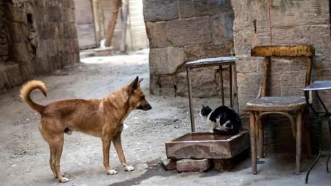 I cani battono i gatti, più neuroni nel loro cervello – swissinfo.ch