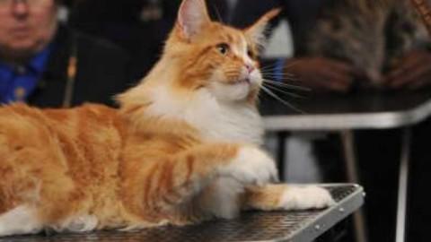 Esposizione felina 20 specie in mostra – TgVerona