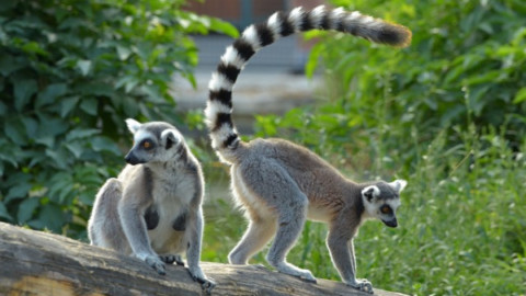Animali domestici davvero strani – focusjunior.it