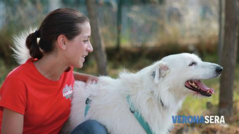 """Domenica 19 novembre al LiveDog Park """"Cani che hanno naso!"""" – Verona Sera"""