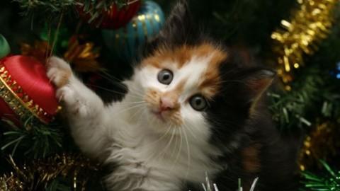 Albero di Natale, come proteggerlo dagli animali domestici – Si24 – Il vostro sito quotidiano