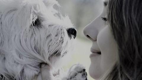 Guardare negli occhi il cane: cosa gli comunichiamo? Cosa vuol … – Riviera24.it
