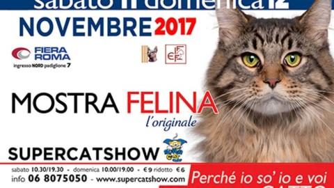 """Amanti dei gatti unitevi, a Roma l'11 e 12 novembre c'è il """"SuperCat … – Dire"""