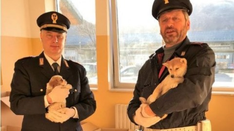 Sequestrati 65 cuccioli di cane trasportati in auto dentro gabbie per … – La Repubblica