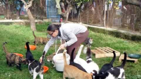 """A Palermo doppia """"gattombola"""" per i mici del rifugio Ediga – La Sicilia"""