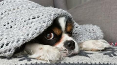 """Ecco perché diciamo che """"Fa un freddo cane"""" – 105.net"""