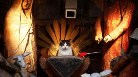 """10 gatti che """"impazziscono"""" per il presepe – 105.net"""