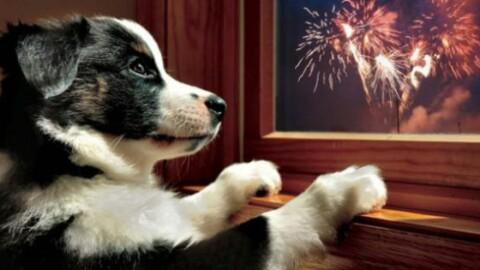 Botti di Capodanno, un incubo per cani e gatti: i consigli per … – La Sicilia