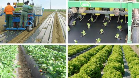 Teli per pacciamatura biodegradabili e compostabili in Mater-Bi