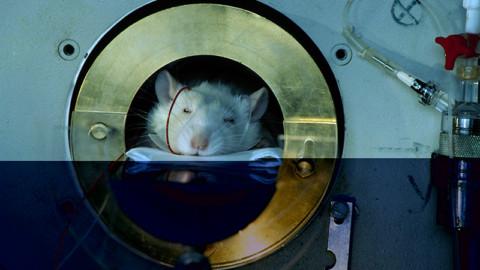 Tempo di TELETHON: sperimentazione animali e business mascherati