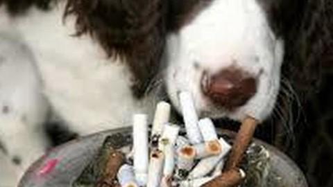 Cani e gatti dei fumatori vivono di meno: lo svela una ricerca sul … – Il Mattino
