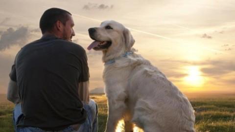 """Camminando insieme"", storie di cani portatori di benessere – Meteo Web"