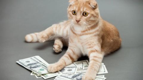 Cryptokitties: cos'è e come funziona lo scambio di gatti attraverso … – Panorama