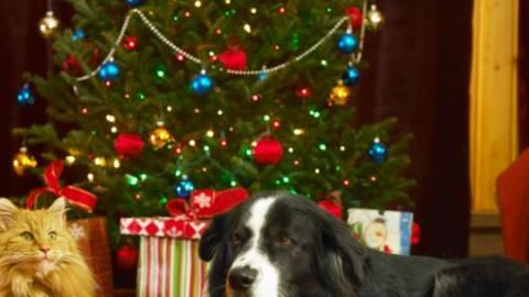 Regalare un cane o un gatto per Natale: le regole da seguire per … – Io Donna