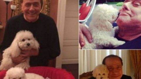 Animali domestici, Berlusconi: 'Sgravi fiscali per chi adotta cani e gatti' – Blasting News