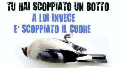 Cosa succede a cani e gatti quando esplodono i botti di capodanno – BergamoNews.it