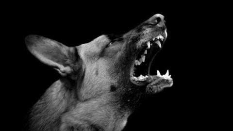 È legale il collare elettrico per cani? – La Legge per Tutti