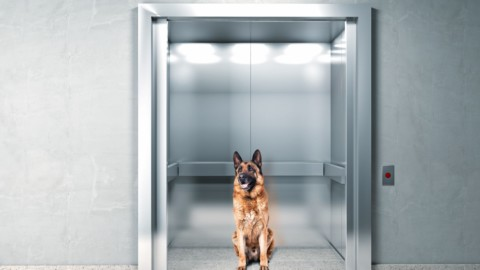 Condominio: le regole per gli animali in ascensore – Studio Cataldi – Studio Cataldi