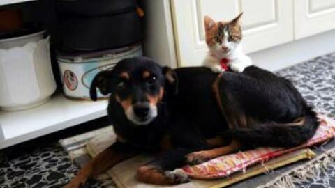 Pediatria: lo studio, cane 'scudo' contro asma bimbi, gatto aumenta … – La Sicilia