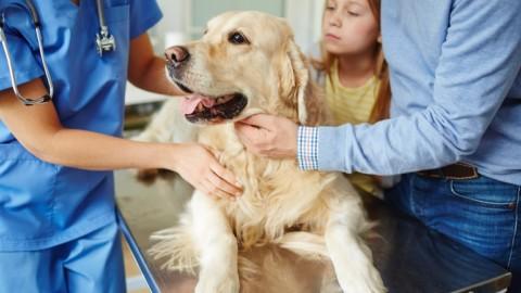 Cane scappa dalla clinica veterinaria: è risarcibile il danno non … – Il Quotidiano Giuridico