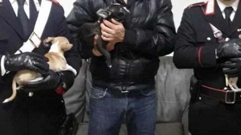 Sedici cani di razza pronti per essere venduti ritrovati grazie a … – RomaToday