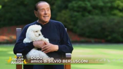 """Berlusconi verso il voto: """"Diritti animali in Costituzione e … – Il Sole 24 Ore"""