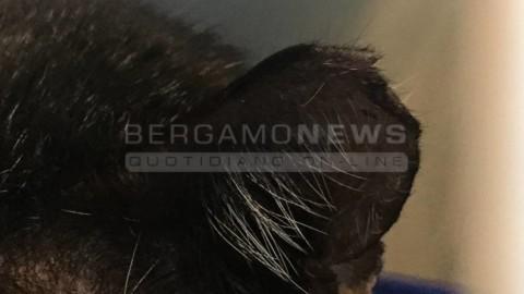 A Bergamo la truffa della sterilizzazione dei gatti con lo sconto – BergamoNews.it